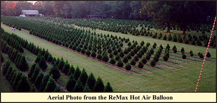 Christmas Tree Farm Louisiana